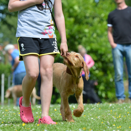 Doggy Day Out - About The Event