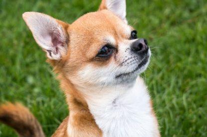 Cute pup 450x450xml