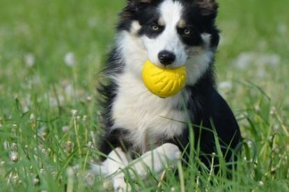 Cute pup with ball 450x450 sml