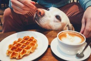 A man enjoying breakfast with his dog