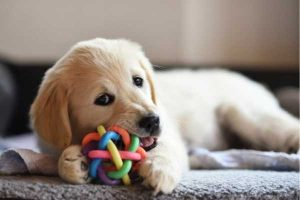 Dog enjoying his toy