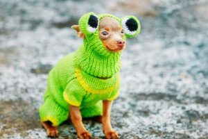 Dog in frog outfit