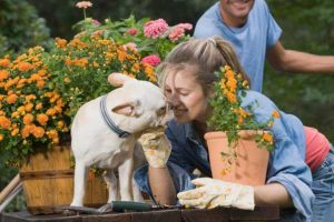 A women gardening with her dog