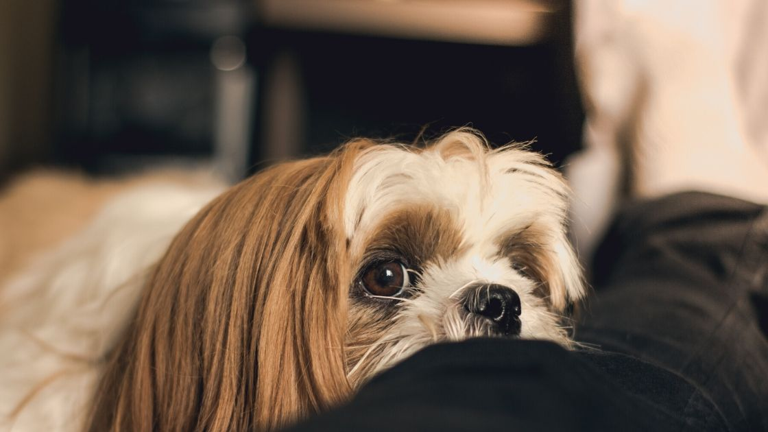 Things to do with your dog during self-isolation