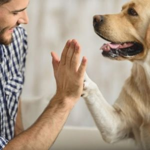 work together with your dog to learn tricks