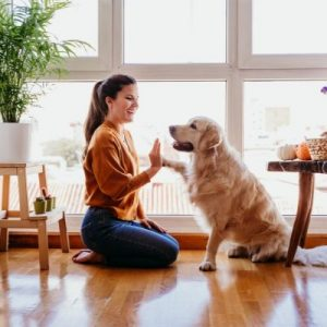 learning tricks with your dog