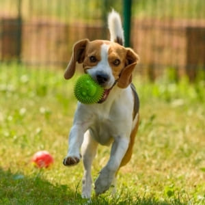 toys for dogs during stage 4 restrictions